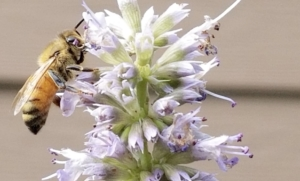 bee, pollination count