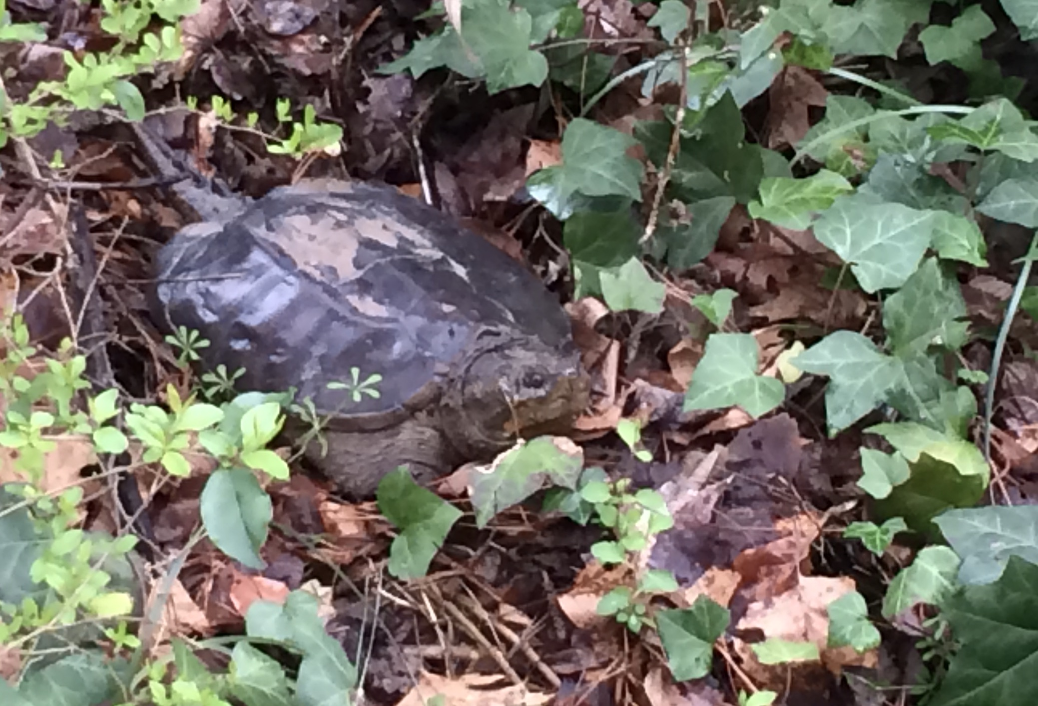 turtle, wildlife, wotus