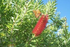 monarch on flower, butterfly
