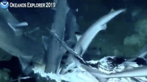 Hope Spot, shark feeding, 2