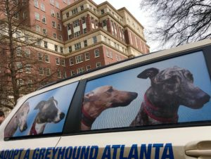 A van with pictures of greyhounds on it