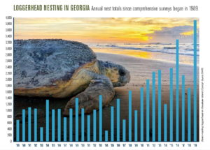 Loggerhead Nesting Chart 1989-2019