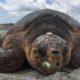 sea turtle, homepage