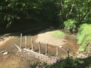 beaver dam, blue heron, under construction