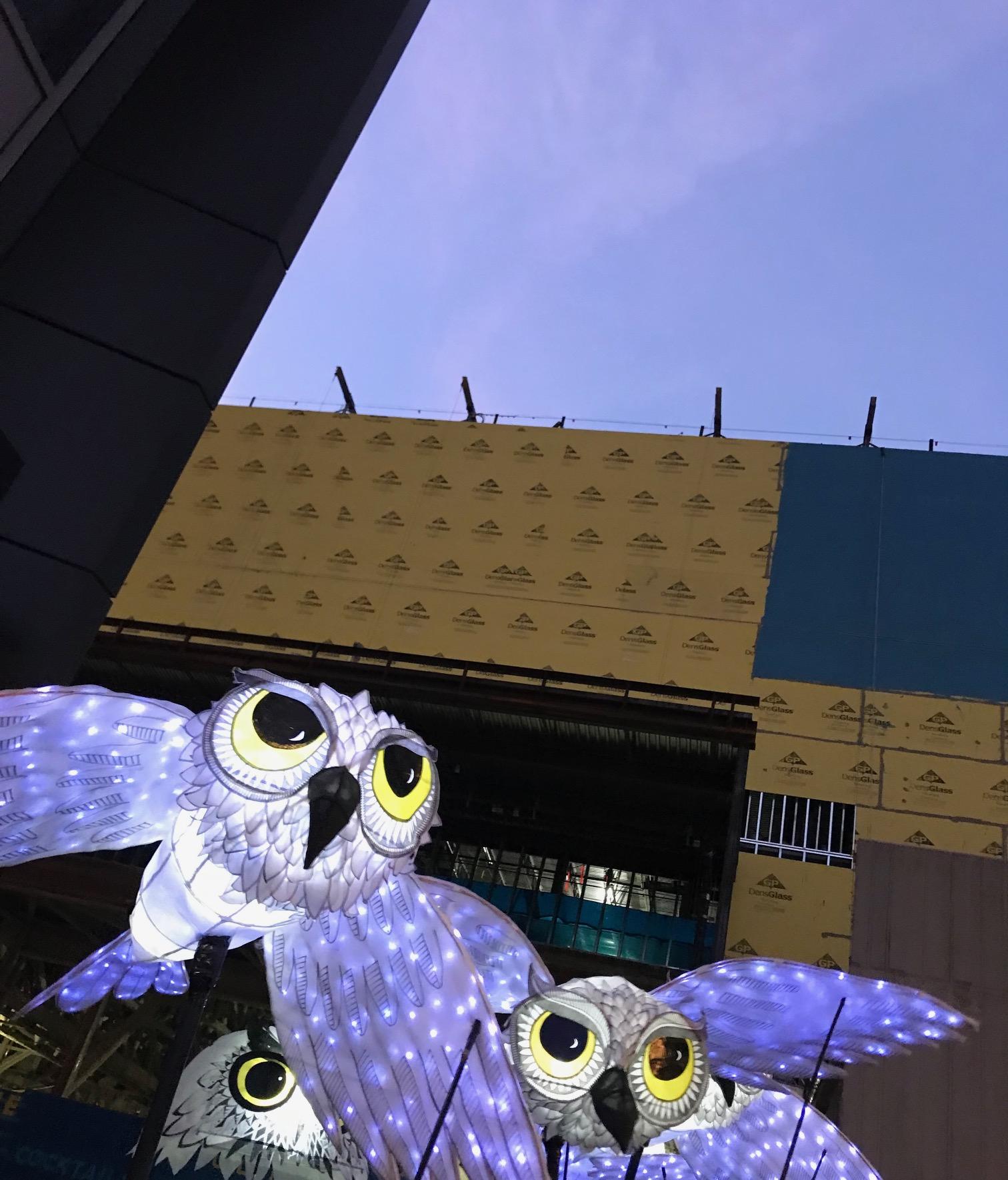 OwlLanterns2019_13