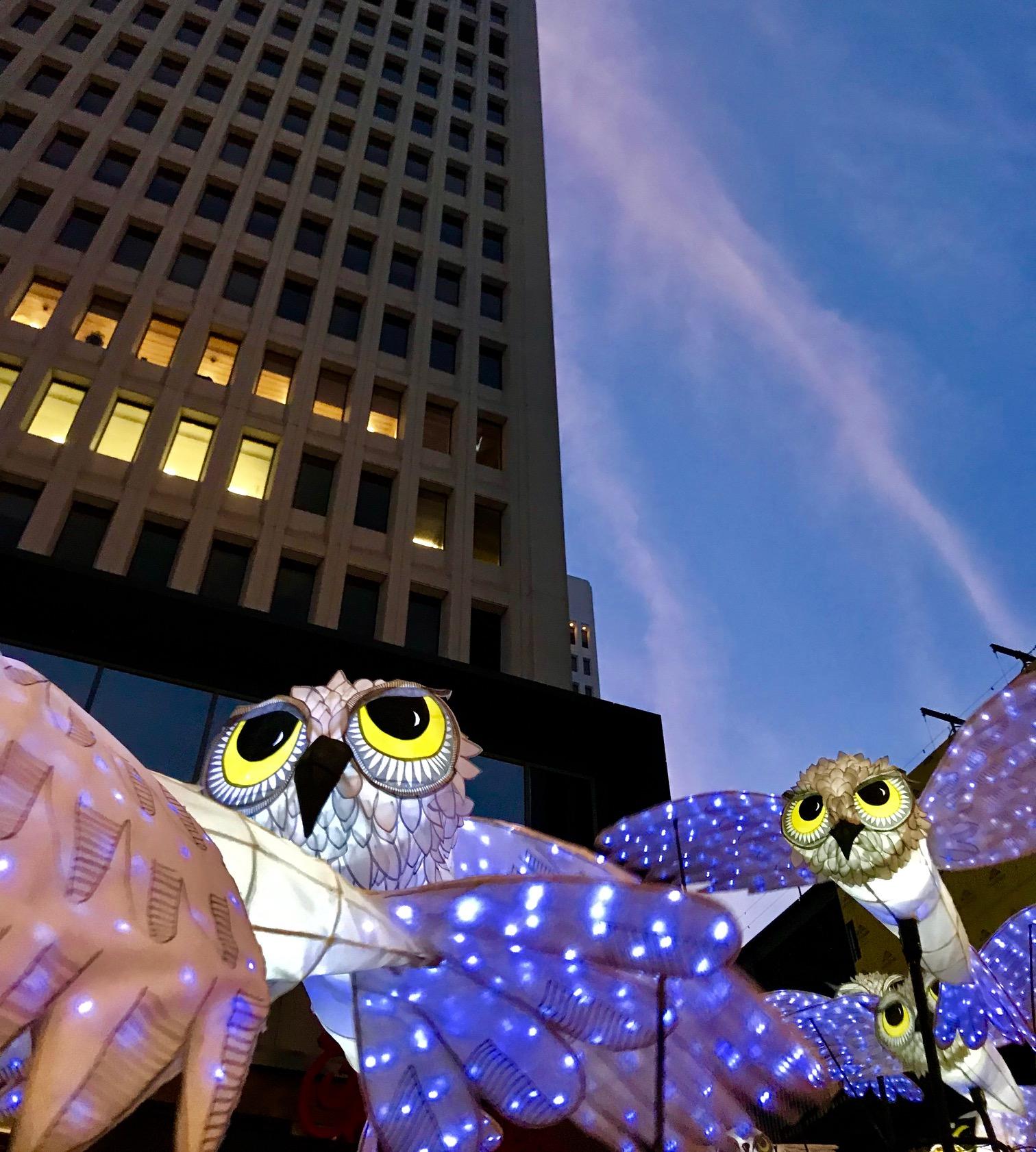 OwlLanterns2019_14