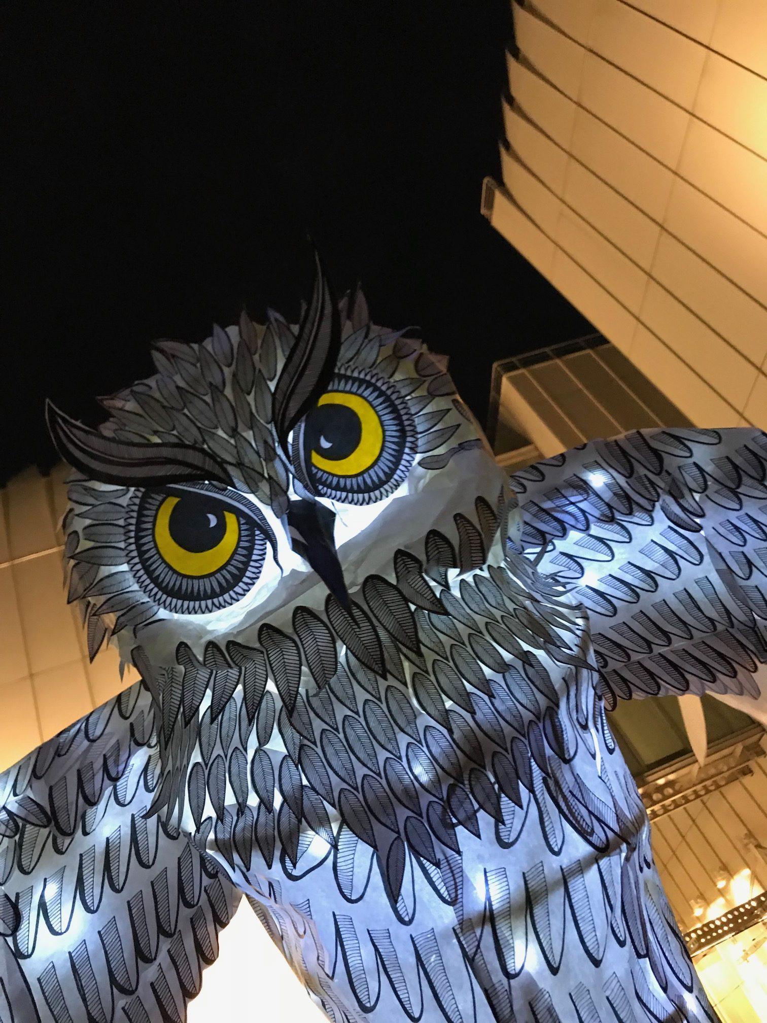 OwlLanterns2019_29