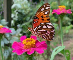 butterfly, 2