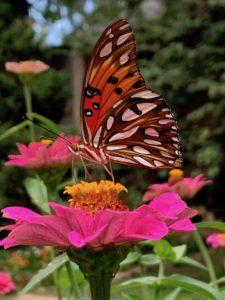 butterfly, 3