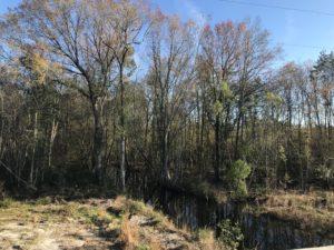 Okefenokee Swamp, pendered