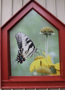 audubon, butterfly