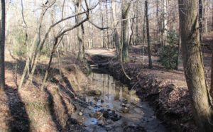 turkey foot creek, Cascade Springs Nature Preserve