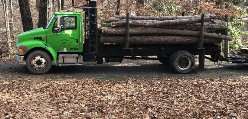 Healthy trees felled at Murphey Candler Park due to construction.