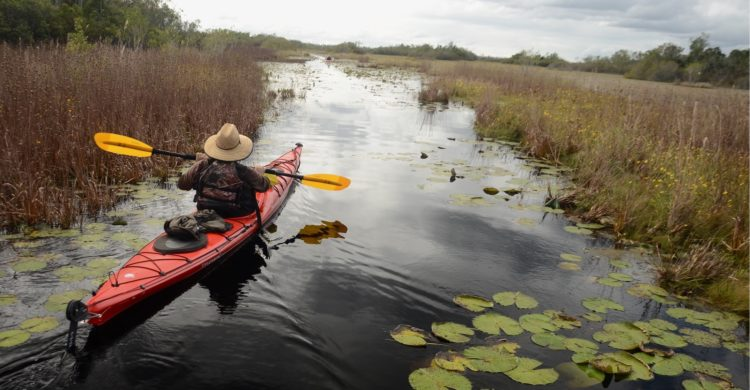 Earth Day 2021: Hope springs eternal, even with threat to Okefenokee Swamp,
