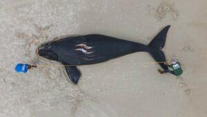 Whale, pix 1