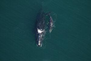 whale, pix 2