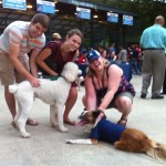 Dogs at Bark in the Park.