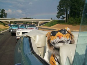 Tiger in the back seat
